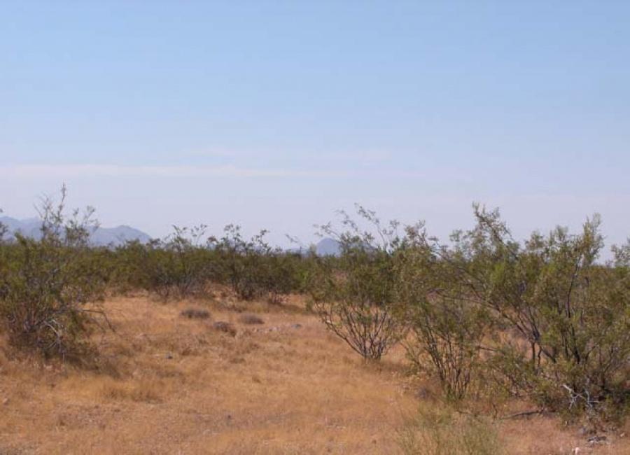 Yucca, Arizona 86438, ,Land,Sold,1014
