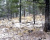 Cloudcroft, New Mexico 88317, ,Land,Sold,1036