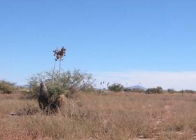 Cochise, Arizona 85606, ,Land,For Sale,1047
