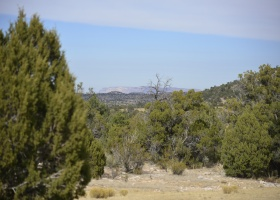 Peach Springs, Arizona 86434, ,Land,Sold,1065