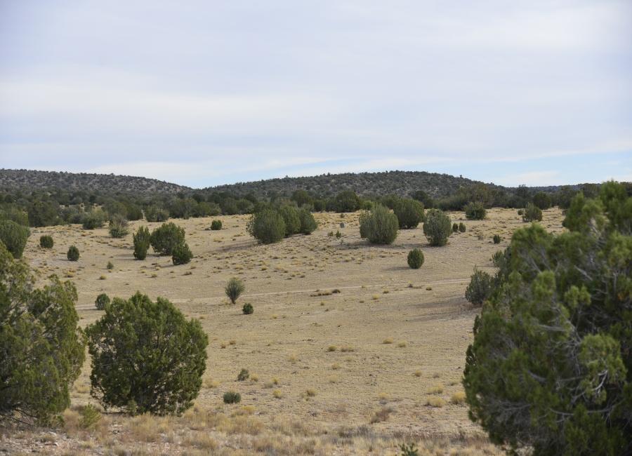 Peach Springs, Arizona 86434, ,Land,For Sale,1065