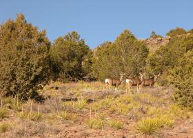 Powell, Arizona 86436, ,Land,Sold,1073